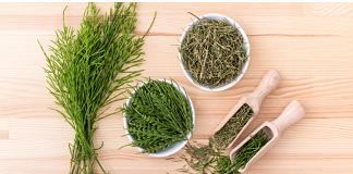 Field horsetail plant-grass 2019